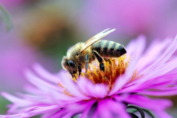 Притча о пчеле и мухе: для тех, кто привык обвинять других.