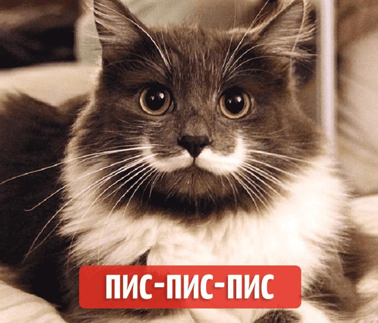 Как подзывают кошек в разных странах мира