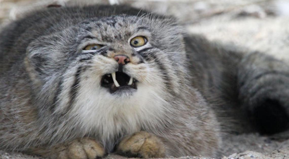Ржачные фото нефотогеничных животных, поднимающие настроение на весь день