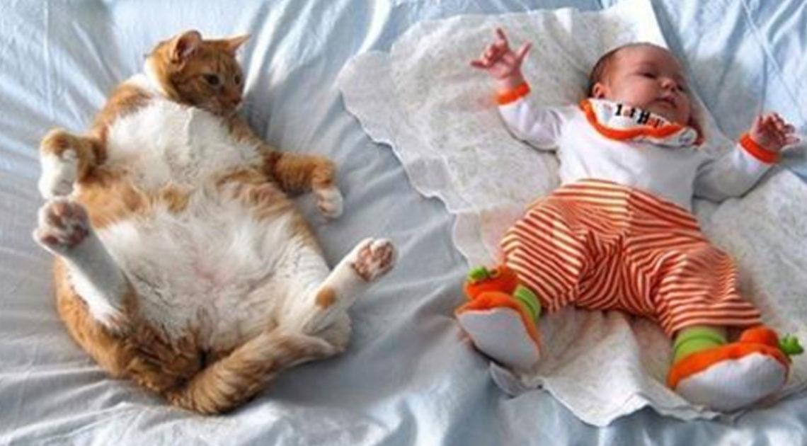 20 причин, почему каждому ребёнку нужен кот