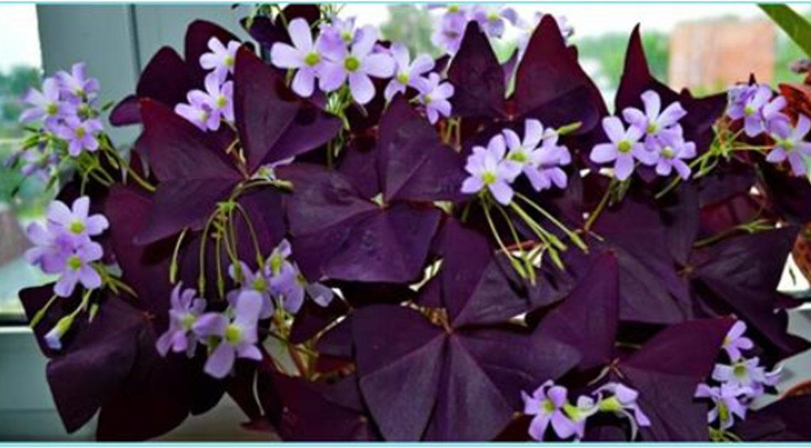 10 комнатных растений, которые могут принести любовь в дом.