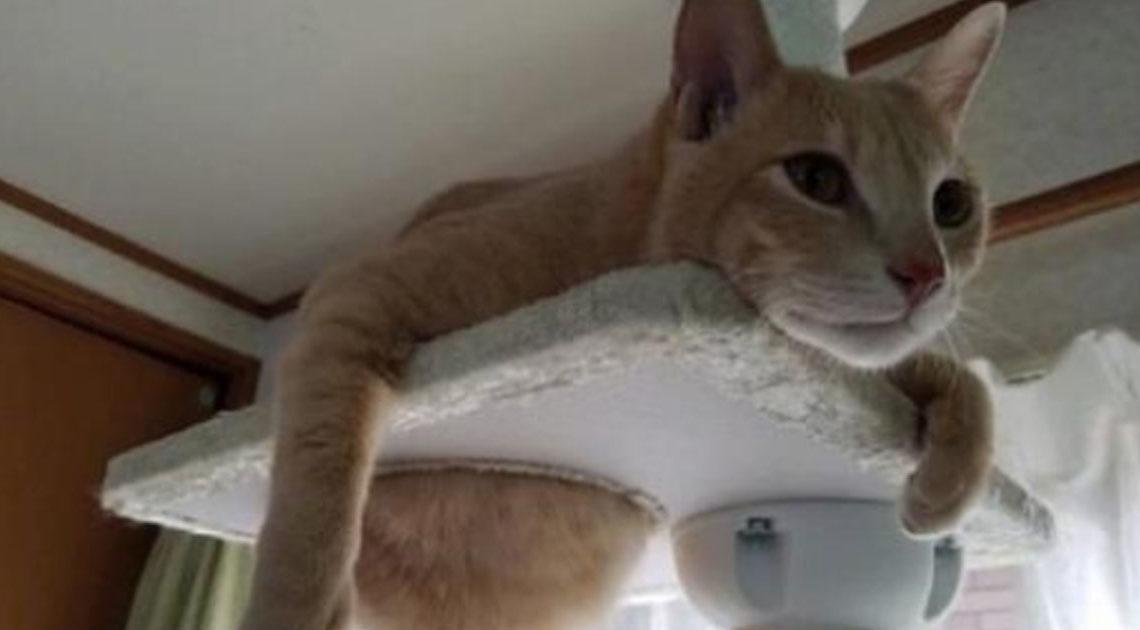 20 обалденных фото, в которых вся суть котов.