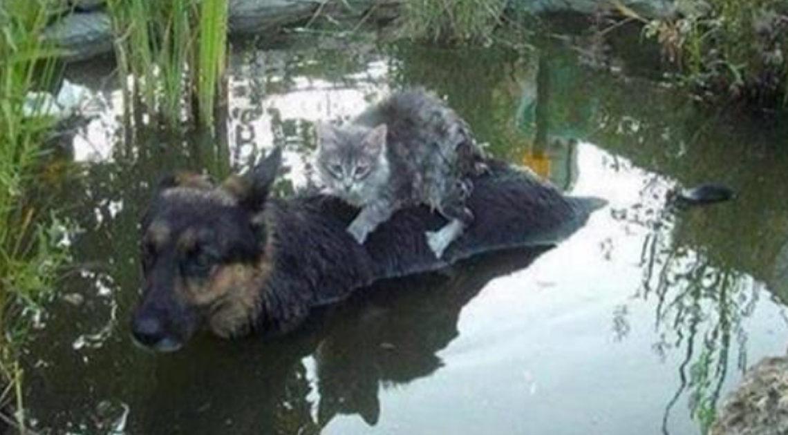 13 фотографий кошек и собак, от которых на душе становится теплее