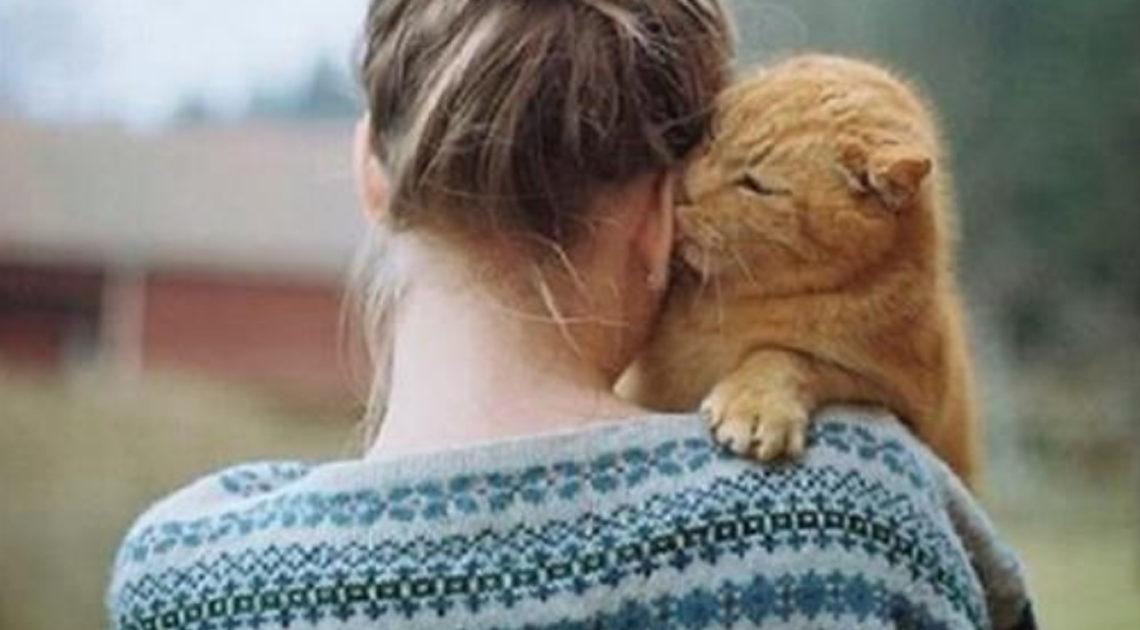 Кошатникам на заметку. 30 интересных фактов о кошках + несколько полезных советов