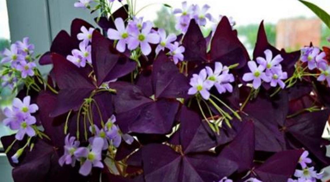 10 комнатных растений для уюта вашего дома