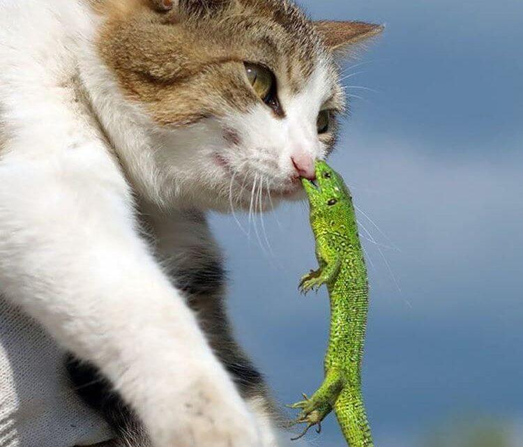 20 котов, которые искали приключений и нашли их