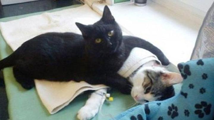 Добрейшая история об огромном кошачьем сердце