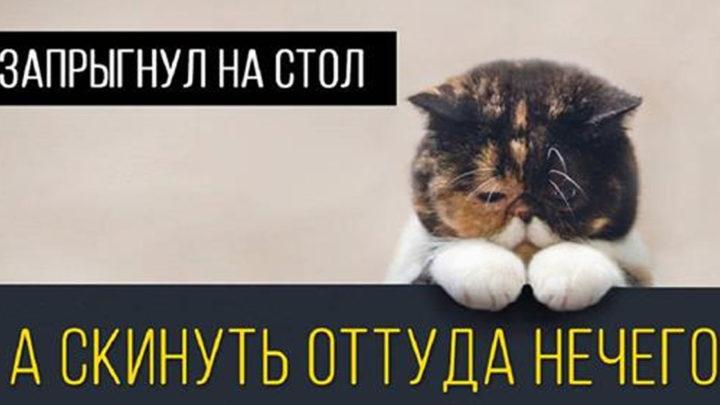 15 кошачьих поводов для грусти