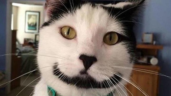 Художества природы: 20 фото котов с необычным окрасом.