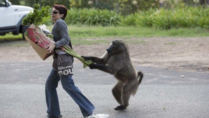 33 животных, во взгляде которых читается: «Не дам — моё»