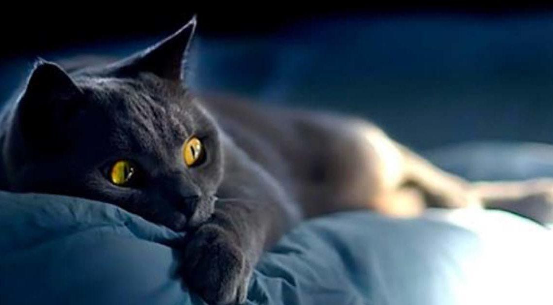 О том, как кошки информируют о присутствии негатива в доме.