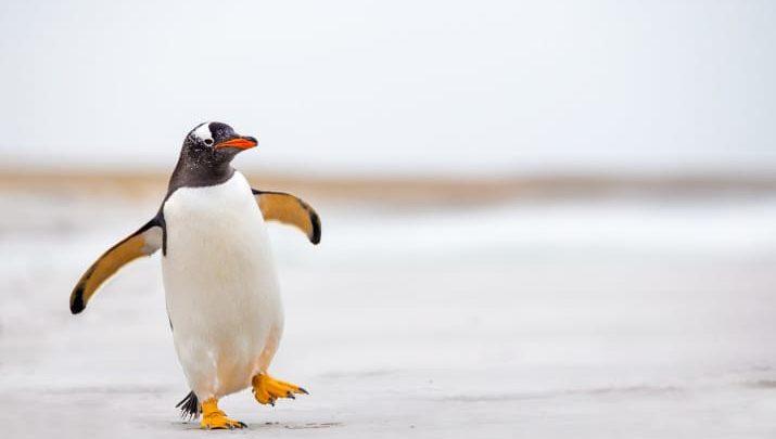 22 неожиданных факта о животных.