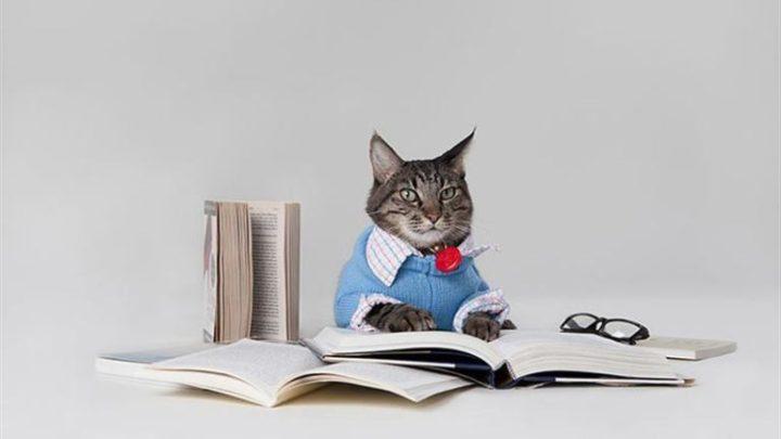10+ неожиданных фактов о котах