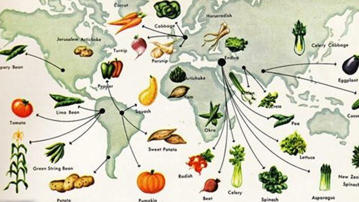 История каждого овоща на вашем столе.